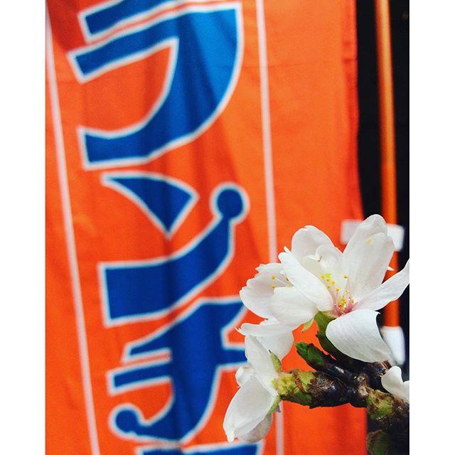 お花見lunch#yoyogihachiman #naturalwine #aux #lunch - from Instagram